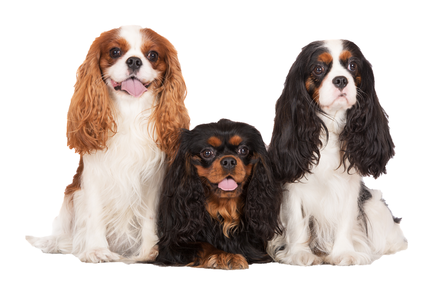 Small Dog Grooming Prices